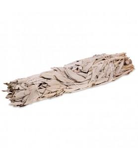 Atado de Salvia Blanca - de 17/18cm